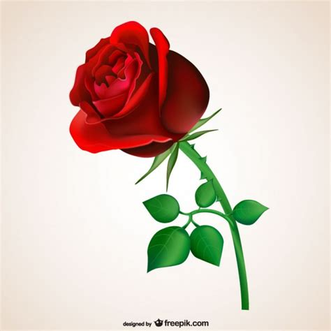 red rosa a graphic roses vectors photos and psd files free download