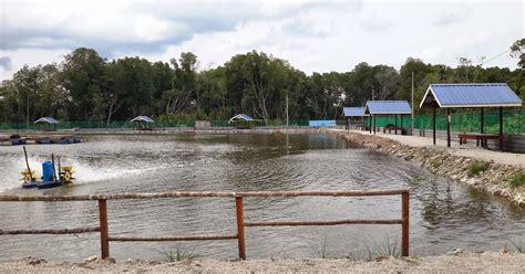 Pancing Baru joranpancing kolam pancing baru dibuka di kuala rompin