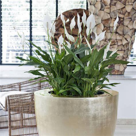 pflanzen im schlafzimmer ungesund zimmerpflanzen im schlafzimmer sinnvoll oder ungesund