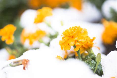 giardino invernale giardino invernale come arredarlo pollicegreen