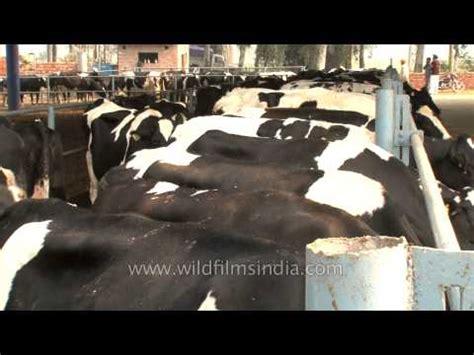 arokya milk cattle feed 40 sec | doovi