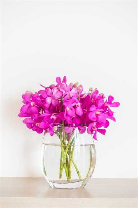 fiore orchidea fiore di orchidea in vaso scaricare foto gratis