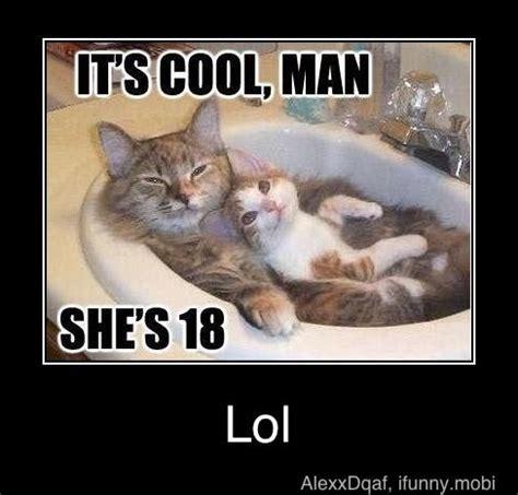 Fail Meme - funny cat fails memes