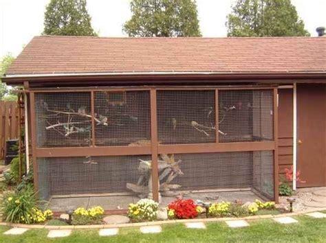 riproduzione cocorite in gabbia gabbie per cocorite uccelli esotici voliere per le