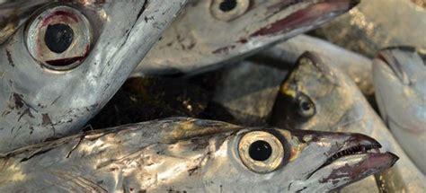 cucinare pesce spatola pesce spatola cucinarepesce