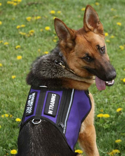service vest in butterfly dual pocket service vest in purple from activedogs dogs with