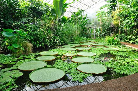 imagenes de jardines terapeuticos tipos de jardines