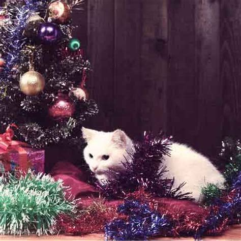 ideas about cat christmas tree repellent easy diy