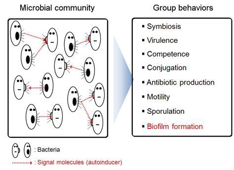 biofilm adalah quorum sensing mekanisme dan contoh quorum sensing pada