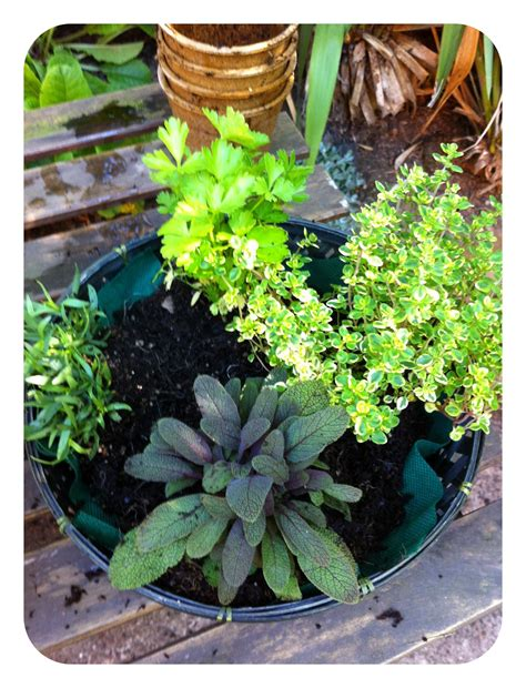 table top herb garden bell and star how to make a tabletop herb garden