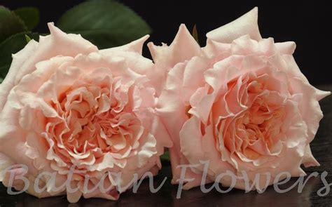 Mayra Flower by Garden Mayra S Batian Flowers
