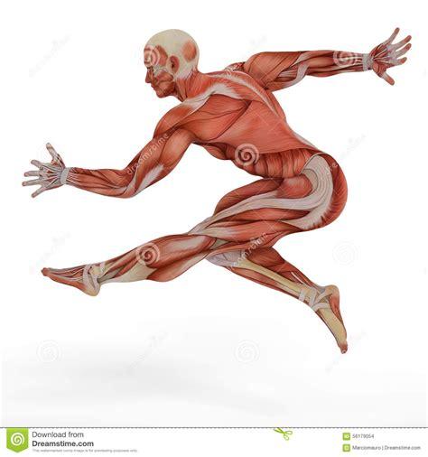 dance anatomy sports anatomy b003nhrwa8 muscle anatomy dance muscle medical mans jump street dance jump stock illustration human