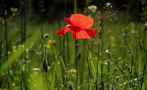Planter En Juin by Jardiner En Juin Que Planter Semer Et Faire Au Jardin