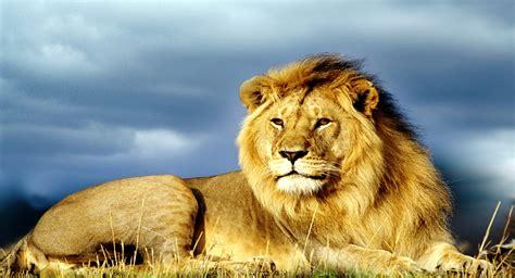 imagenes de paisajes y animales hermosos im 225 genes de paisajes bonitos gratis con animales salvajes