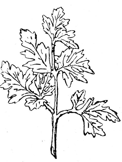 coloring page parsley coloring pages and print parsley coloring pages
