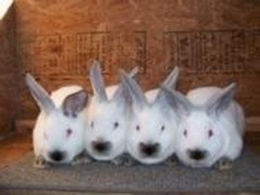 gabbie per conigli da carne vendita conigli conigli