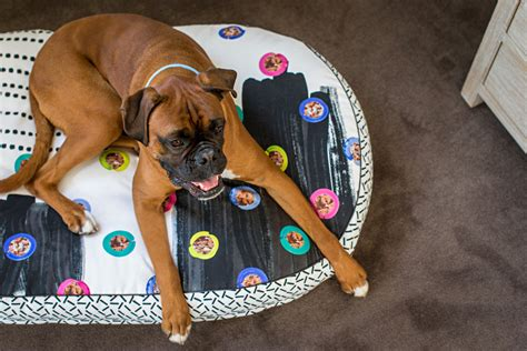 nice dog beds modern dog beds and accessories by nice digs dog milk