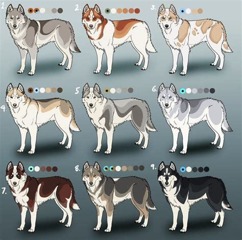 husky coat colors in addition to the splendid variety of coat colors