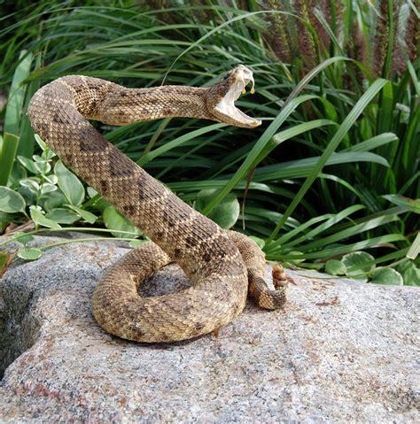 Garden Snake Rattle Ophidiophobia The Fear Of Snakes Beatyourfears