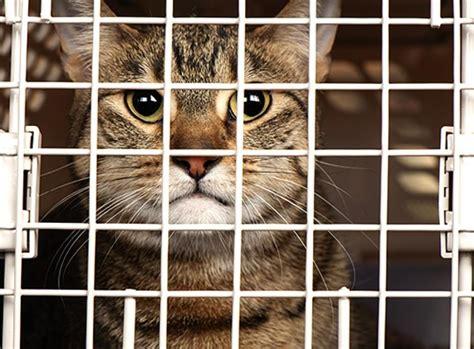 Kandang Kucing 2018 daftar harga kandang kucing semua ras juli 2018 terbaru