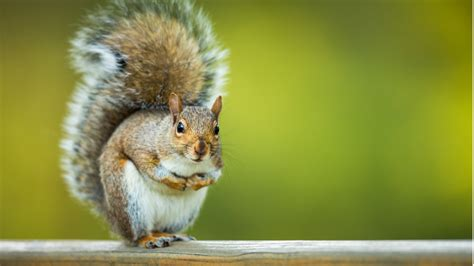 25 surprising facts about squirrels 24 7 wall st