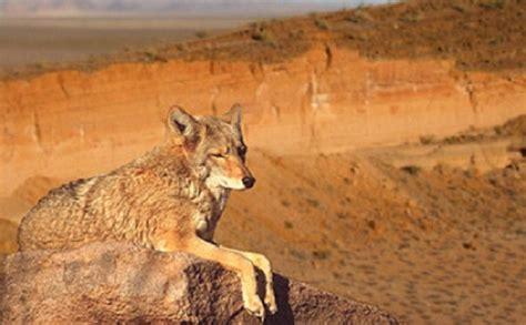 imagenes de animales del desierto animales del desierto de chihuahua cu 225 les son nombres y