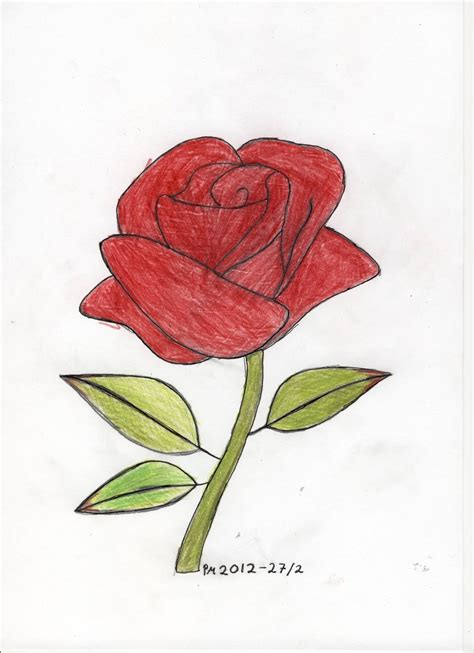 Drawing Roses by Step By Step Drawings