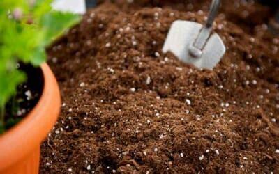 vendita terra da giardino il terriccio per piante da giardino e d appartamento