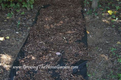 creating a deer resistant shade garden part 1 growing