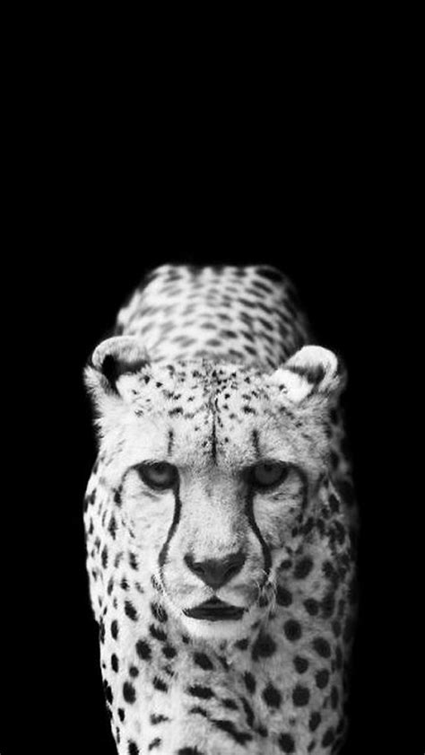 black and white leopard wallpaper black and white leopard wallpaper