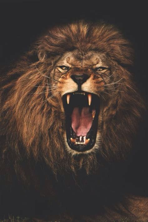lion tattoo on pinterest the 25 best ideas about roaring lion tattoo on pinterest