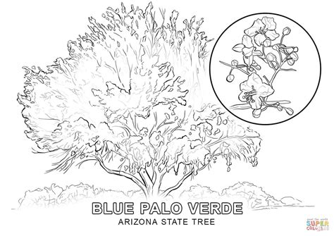 kids coloring pages trees az coloring pages arizona state tree coloring page free printable coloring