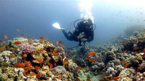 dive dahab scuba diving sea dive of dahab 2015