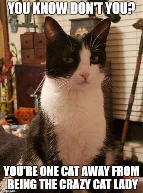 Cat Lady Memes - judging cat imgflip