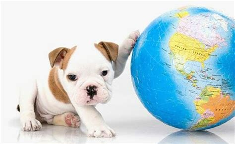 day with new puppy five ways to celebrate earth day with your pets pet community center