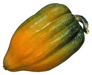 Types of green squash images amp pictures becuo