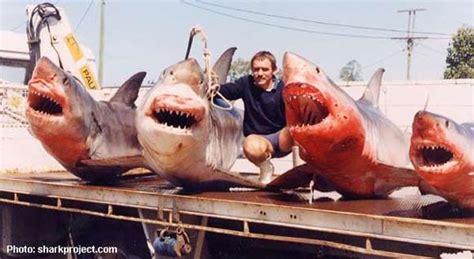 urin gegen schuppen haie die wahrheit 252 ber diese tiere www korallenriff de