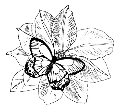 coloring pages of butterflies and flowers coloring pages flowers butterflies coloring home