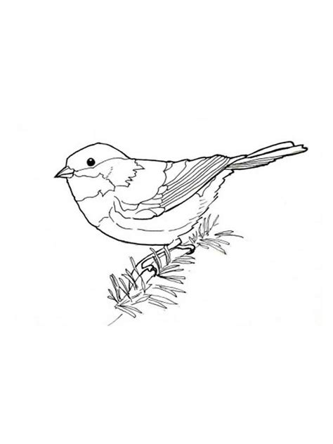 coloring page of house sparrow colouring in pictures coloring page of house sparrow