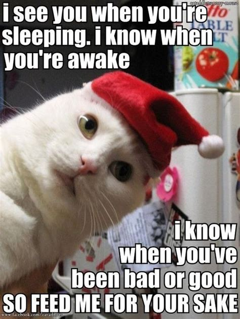 Cute Christmas Meme - 25 best cat memes images on pinterest funny kitties kawaii cat and funny animals