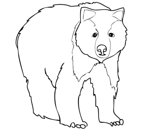 coloring page of grizzly bear grizzly bear printable coloring pages