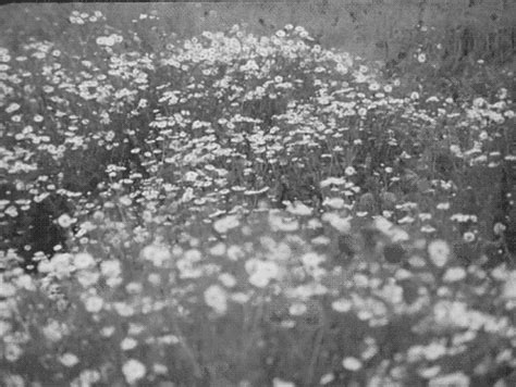 Landscape Gif Black And White Flowers Gif Find On Giphy