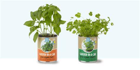 best indoor herb garden 10 best indoor herb gardens in 2018 indoor gardens for