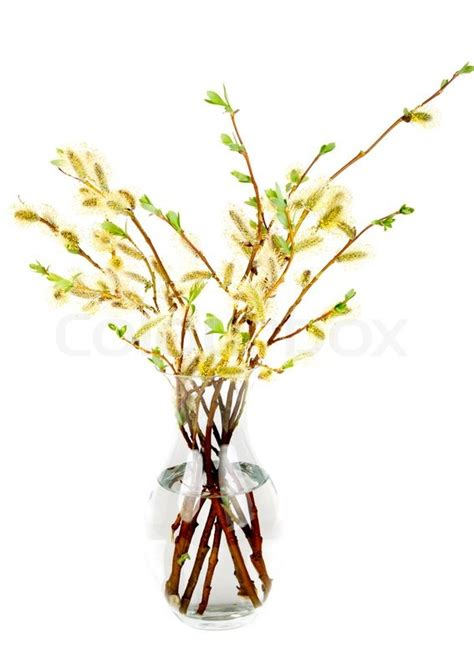 branches of the willow with flowering bud in vase
