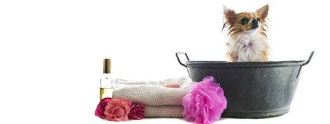 dog groomers that come to your house dog grooming elliot s house services