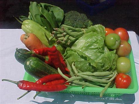 Tempat Buah Sayur Lipat Keranjang Buah Sayur Lipat Tirisan Sayur Pro nuga co ingin menarik makan buah dan sayur