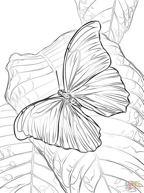 owl butterfly coloring page giant blue morpho butterfly coloring page free printable