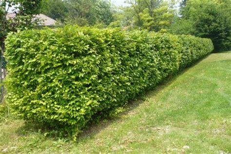 costo giardiniere giardiniere a roma prezzi modici potatura taglio alberi