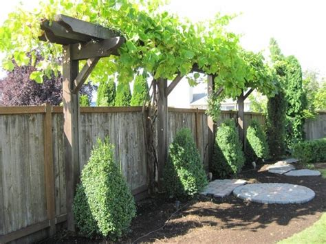Backyard Grape Vine by Best 25 Grape Arbor Ideas On