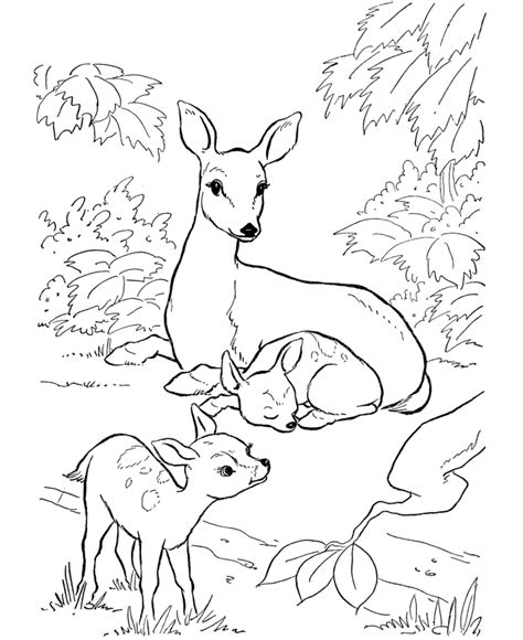 deer coloring pages online free printable deer coloring pages for kids
